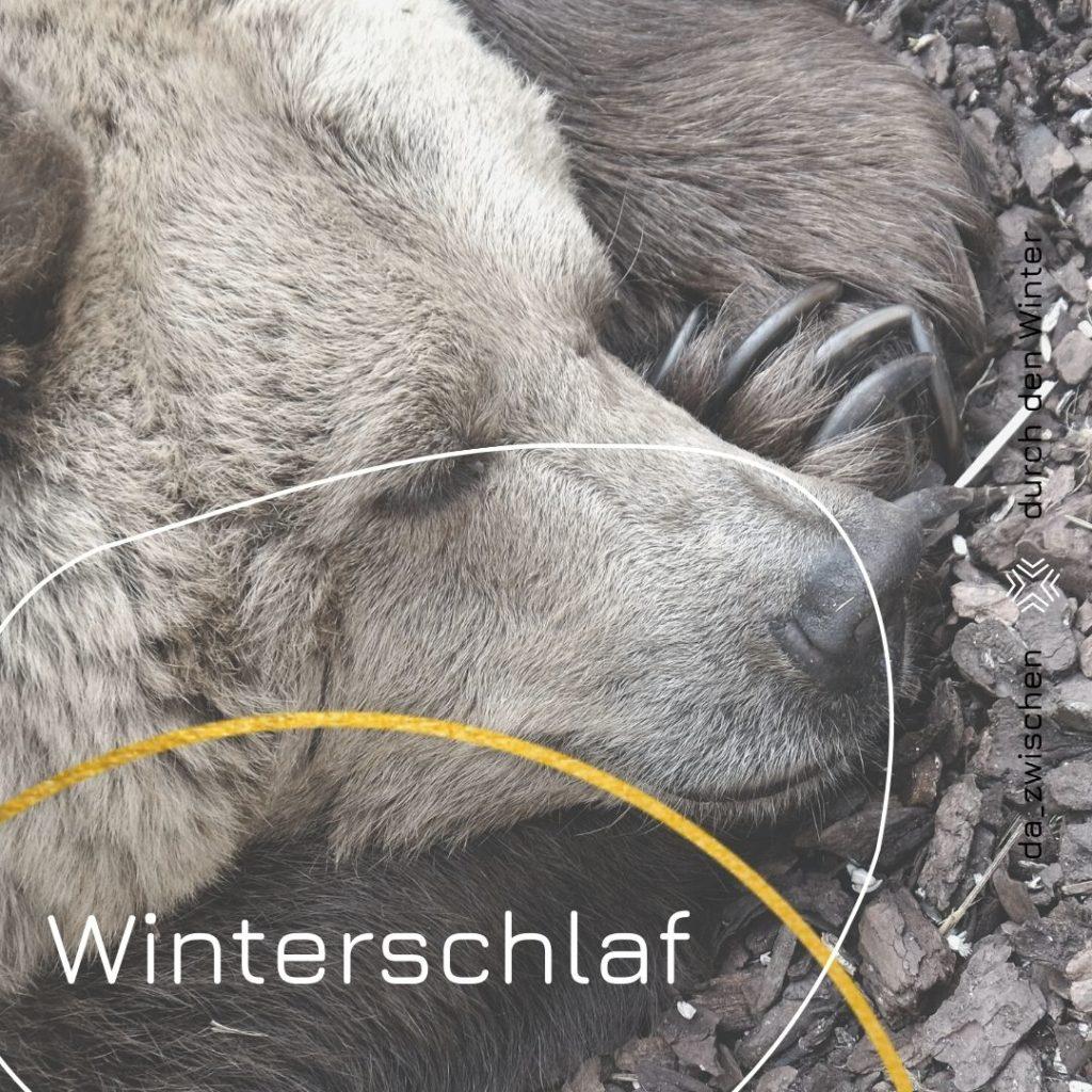 Kopie von DURCH DEN WINTER zum bearbeiten von allen 1024x1024 - Winterschlaf
